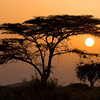 Kenya : 28 galleries with 1310 photos